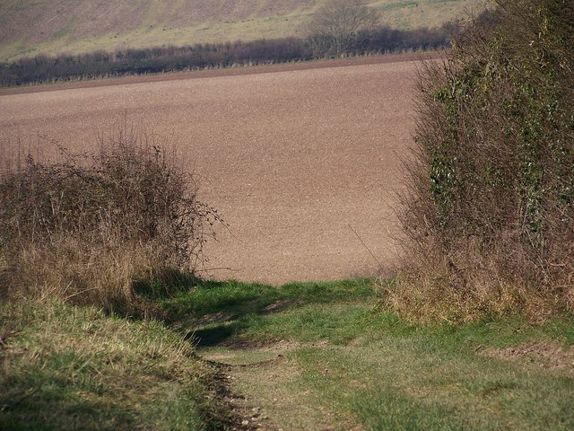 Bridleway towards Tenantry Bottom