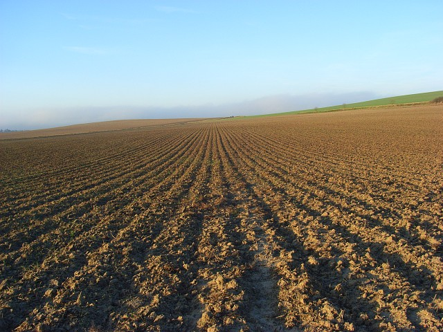 Farmland, South Stoke
