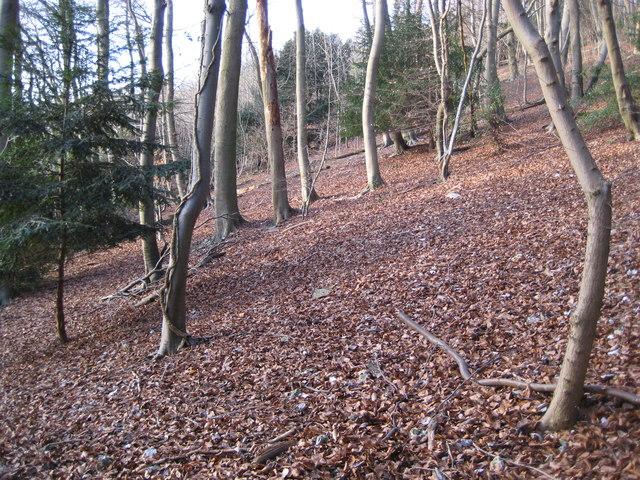 Hughenden Manor: Hanging Wood