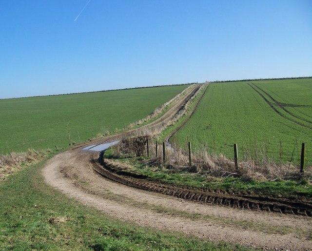 Bridleway across Tenantry Down