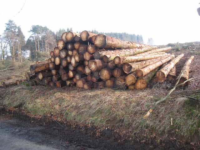 Roadside pile of logs