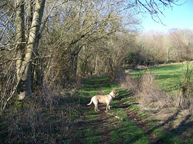 Bridleway near the Ackling Dyke