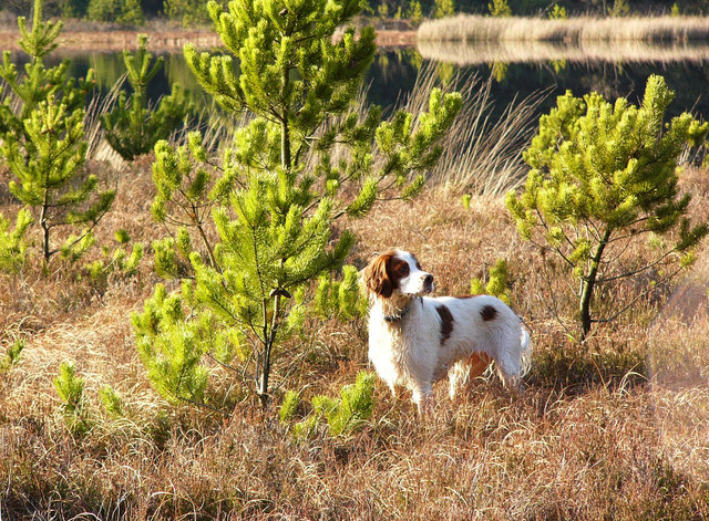 Loch Wayoch - bog and dog