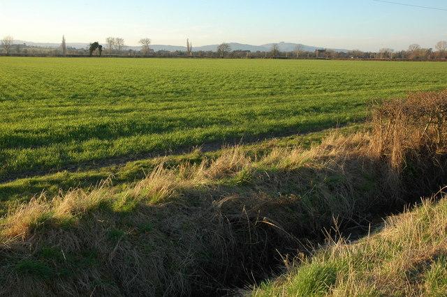 Farmland at Longney