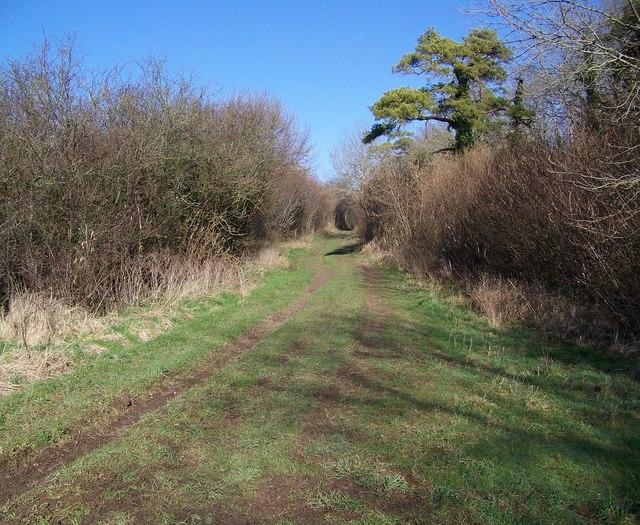 Bridleway beside the Ackling Dyke