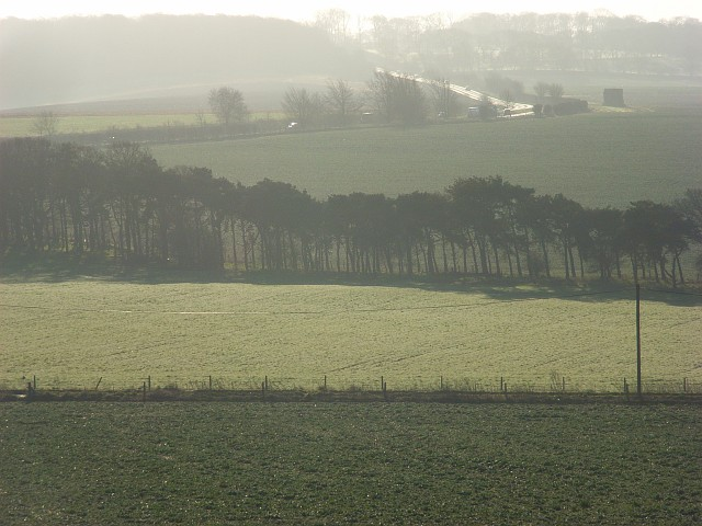 Farmland with pines, South Stoke