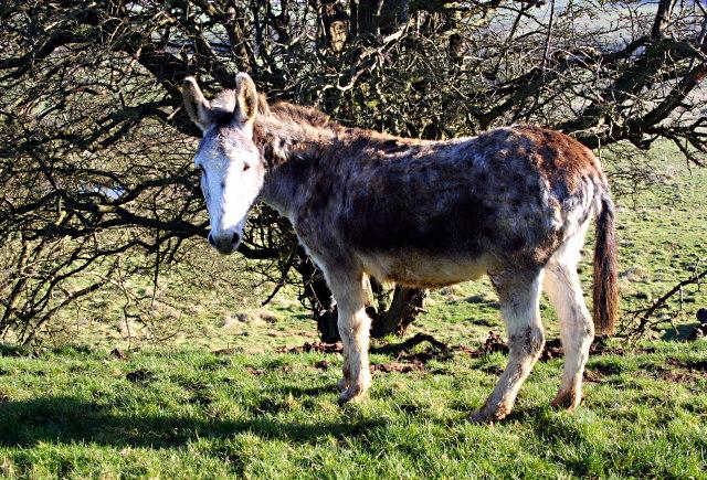 Donkey on Flint Hill