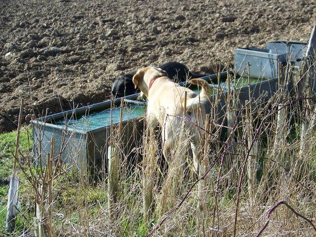 Water trough near the Ackling Dyke