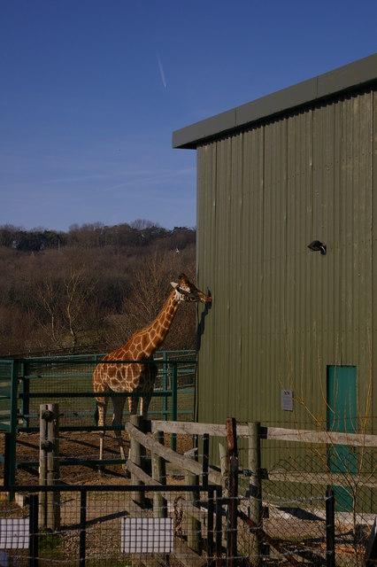 Giraffe House at Port Lympne Zoo
