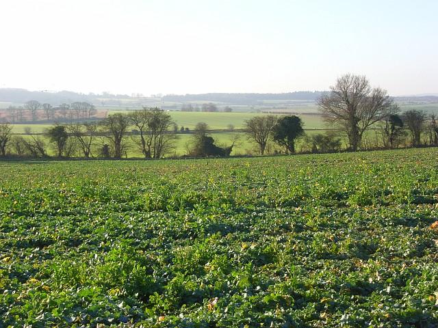 Farmland, Ipsden