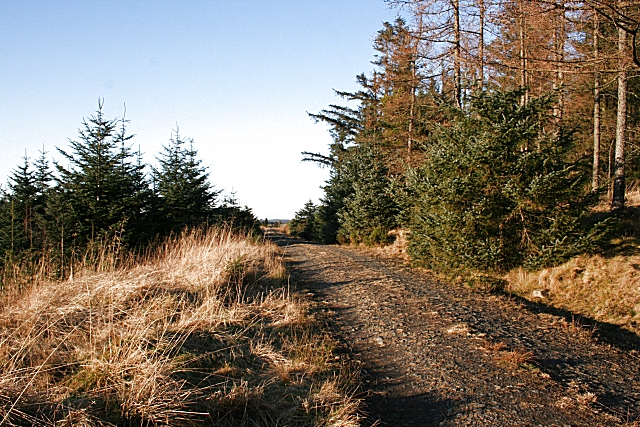 Forest Road on Dunbennan Hill