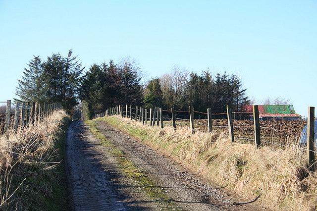 Lane by Rush Head