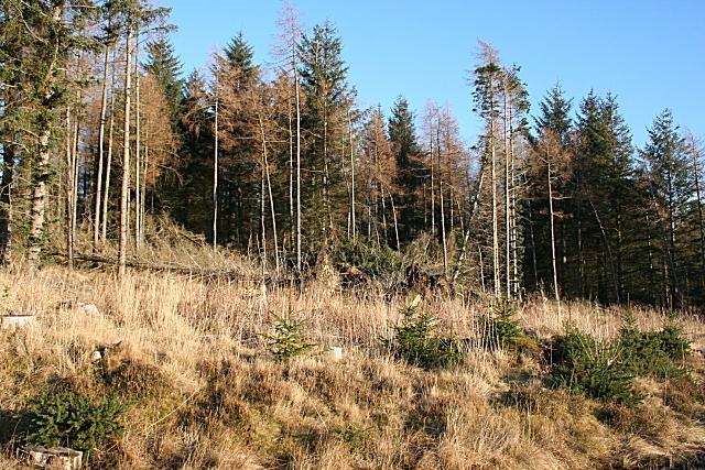 Dunbennan Forest