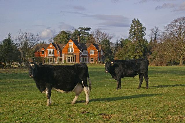 Buckland Lodge
