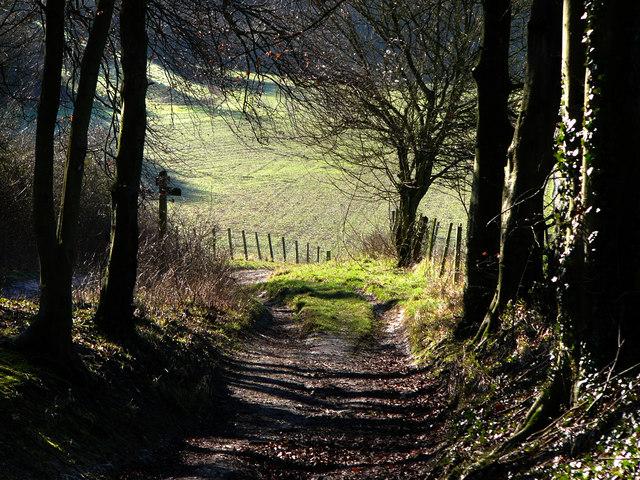 Downland footpath