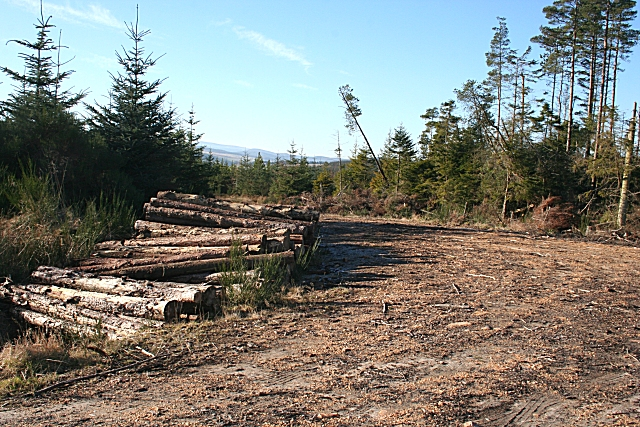 Log Piles by the Forest Road