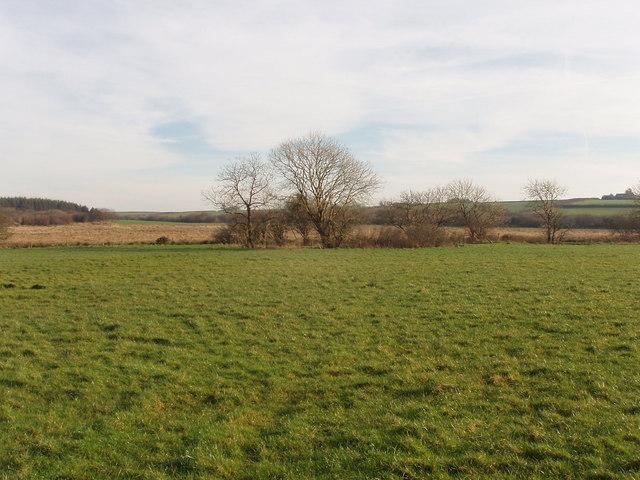 Fields opposite True Plantation