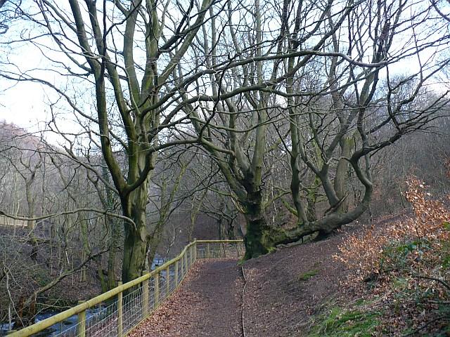 Footpath at Cwm Carn