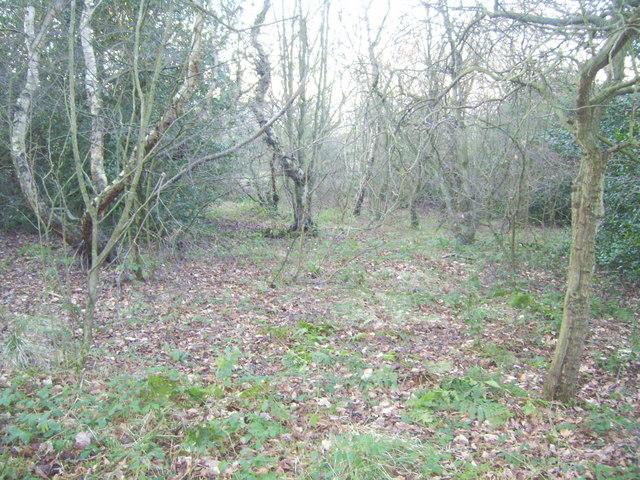 Ousterley Wood