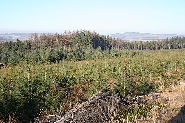 Balloch Wood