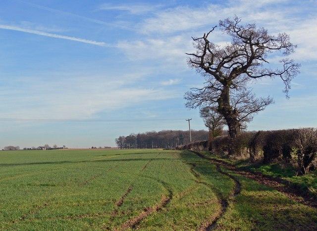 Farmland near Orton-on-the-Hill