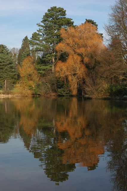 Trees, and lake, Whitbourne Hall