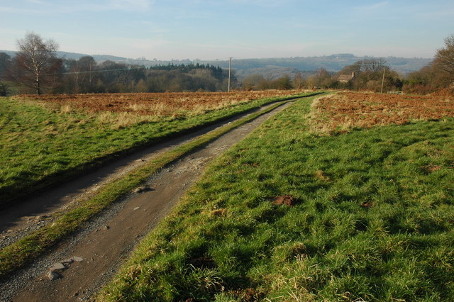 Track on Bringsty Common