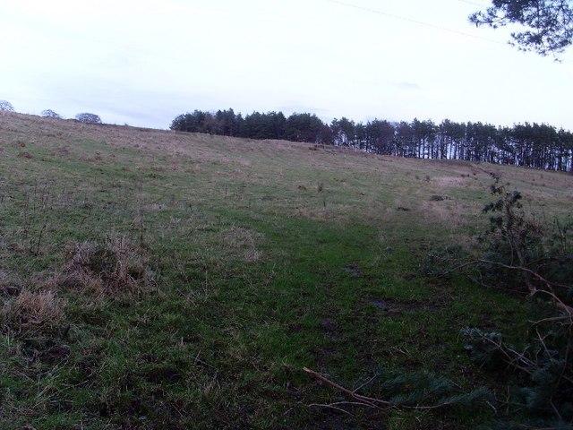 Grazing land by Cochno Farm