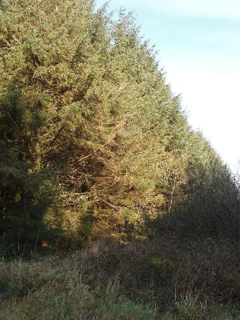 Summerwell Moor Plantation