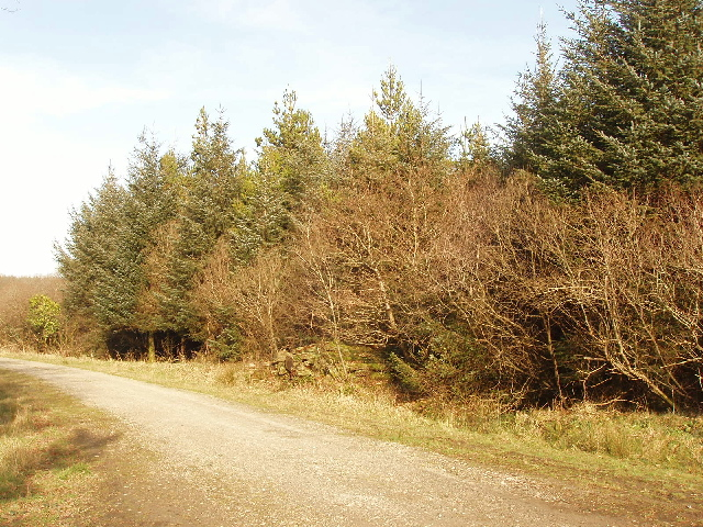 Track in Summerwell Moor Plantation