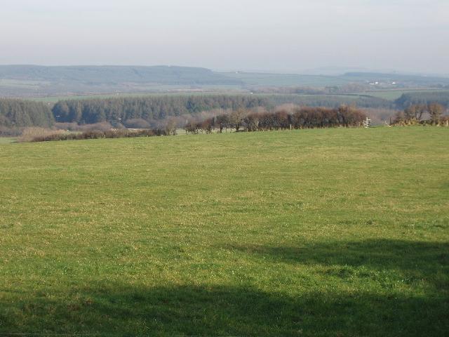 Pasture on Summerwell Moor