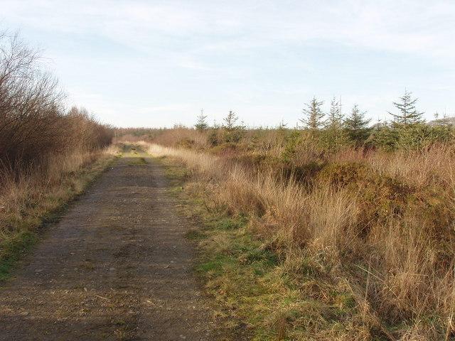 Track into True Plantation