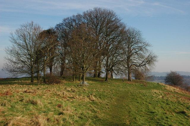 Jubilee trees, Bringsty Common