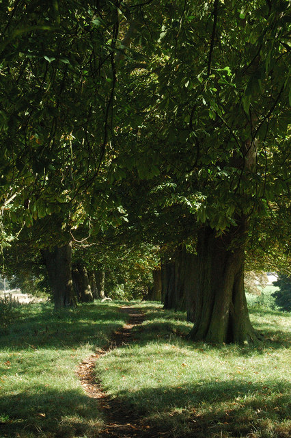 Path through an avenue of Horse Chestnut trees