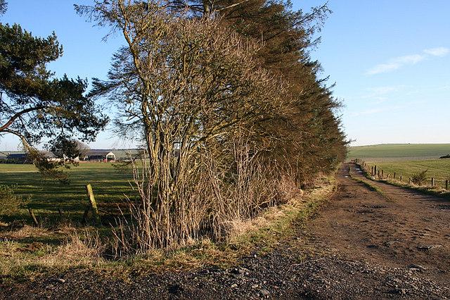 The muddied lane to Blackhouse Farm