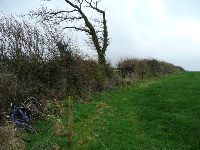 Hedgerow with abandoned bike.