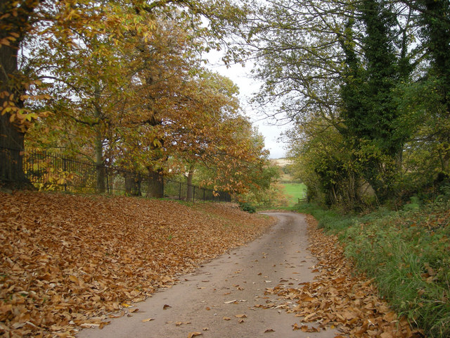 Autumn leaves at Upton Cressett