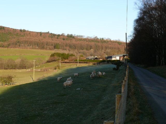 Fferm Cuddig / Cuddig Farm