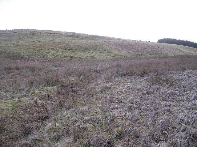 Weaver's Moss