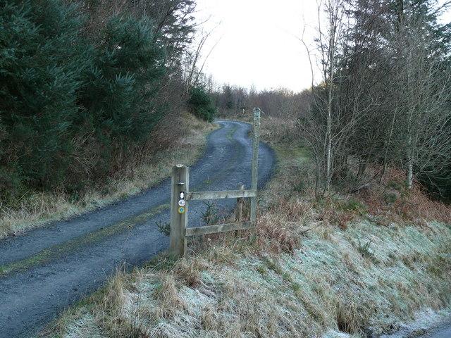 Ffordd Fforest ger Ffridd Bryn-gogledd  / Forest Road near Ffridd Bryn-gogledd