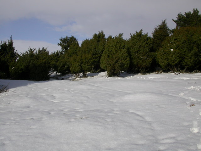 Trees in snow, North of Dunachtonmore