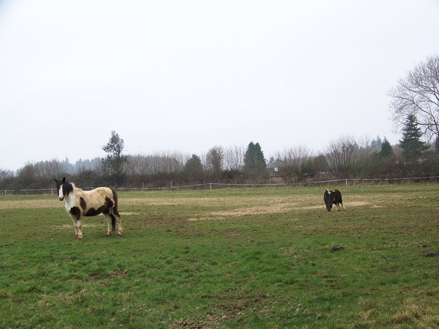 Coloured ponies near Fonthill Bishop