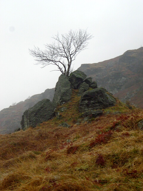 Tree in Glen Gyle