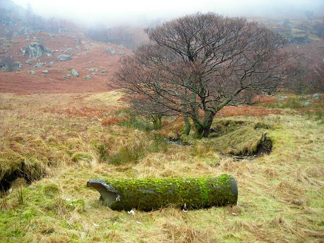 Tree, Pipe and Burn in Glen Gyle
