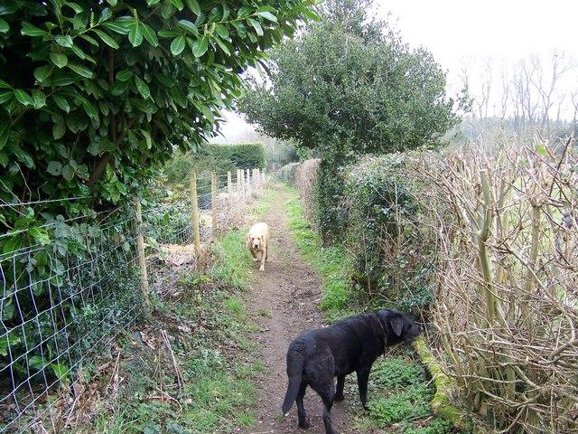 Enclosed footpath near Fonthill Bishop