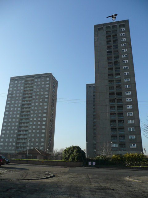 Magpie above the tower blocks