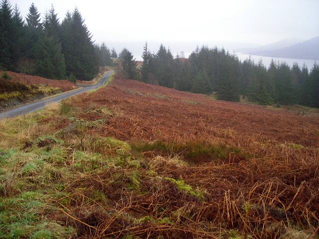 Hillside Above Loch Katrine