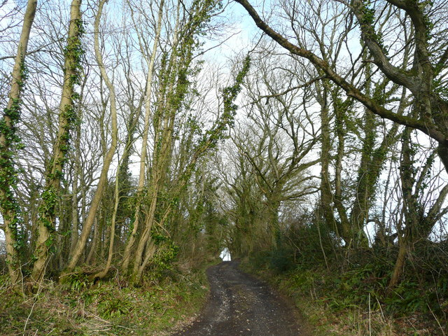 Rough track and footpath