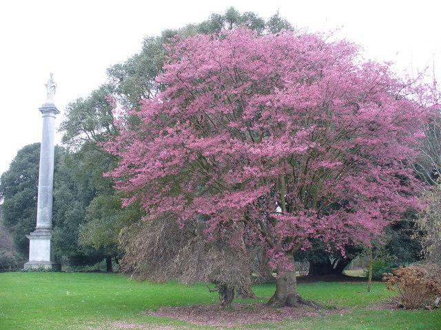 Syon Park Spring