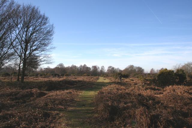 Headley Heath: Purley Plain